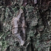 ???   Fotografijos autorius : Vytautas Gluoksnis   © Macrogamta.lt   Šis tinklapis priklauso bendruomenei kuri domisi makro fotografija ir fotografuoja gyvąjį makro pasaulį.