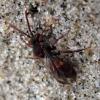 Hymenoptera sp | Fotografijos autorius : Vitalii Alekseev | © Macrogamta.lt | Šis tinklapis priklauso bendruomenei kuri domisi makro fotografija ir fotografuoja gyvąjį makro pasaulį.