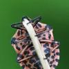 Juostelinė skydblakė - Graphosoma lineatum | Fotografijos autorius : Vidas Brazauskas | © Macrogamta.lt | Šis tinklapis priklauso bendruomenei kuri domisi makro fotografija ir fotografuoja gyvąjį makro pasaulį.