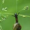 Lapinė krūmsraigė - Fruticicola fruticum | Fotografijos autorius : Vidas Brazauskas | © Macrogamta.lt | Šis tinklapis priklauso bendruomenei kuri domisi makro fotografija ir fotografuoja gyvąjį makro pasaulį.