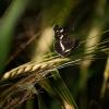 Mažasis dilgėlinukas | Fotografijos autorius : Saulius Drazdauskas | © Macrogamta.lt | Šis tinklapis priklauso bendruomenei kuri domisi makro fotografija ir fotografuoja gyvąjį makro pasaulį.