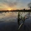 Saulėlydis | Fotografijos autorius : Gintautas Steiblys | © Macrogamta.lt | Šis tinklapis priklauso bendruomenei kuri domisi makro fotografija ir fotografuoja gyvąjį makro pasaulį.