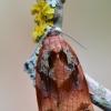 Visaėdis archipsas - Archips podana | Fotografijos autorius : Arūnas Eismantas | © Macrogamta.lt | Šis tinklapis priklauso bendruomenei kuri domisi makro fotografija ir fotografuoja gyvąjį makro pasaulį.