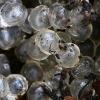 Juosvojo šliužo (Limax cinereoniger) kiaušinėliai | Fotografijos autorius : Gintautas Steiblys | © Macrogamta.lt | Šis tinklapis priklauso bendruomenei kuri domisi makro fotografija ir fotografuoja gyvąjį makro pasaulį.