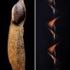 Paprastoji eglė - Picea abies, sėkla | Fotografijos autorius : Oskaras Venckus | © Macrogamta.lt | Šis tinklapis priklauso bendruomenei kuri domisi makro fotografija ir fotografuoja gyvąjį makro pasaulį.