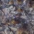 Ąžuolinis niūravabalis - Hypulus quercinus   Fotografijos autorius : Giedrius Markevičius   © Macrogamta.lt   Šis tinklapis priklauso bendruomenei kuri domisi makro fotografija ir fotografuoja gyvąjį makro pasaulį.