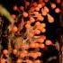 Apgaulusis krekenis - Trichia decipiens | Fotografijos autorius : Ramunė Vakarė | © Macrogamta.lt | Šis tinklapis priklauso bendruomenei kuri domisi makro fotografija ir fotografuoja gyvąjį makro pasaulį.