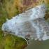 Baltoji nolija - Meganola albula   Fotografijos autorius : Žilvinas Pūtys   © Macrogamta.lt   Šis tinklapis priklauso bendruomenei kuri domisi makro fotografija ir fotografuoja gyvąjį makro pasaulį.