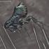 Blusa - Ceratophyllus sp. | Fotografijos autorius : Gintautas Steiblys | © Macrogamta.lt | Šis tinklapis priklauso bendruomenei kuri domisi makro fotografija ir fotografuoja gyvąjį makro pasaulį.