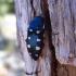 Buprestis octoguttata Linnaeus, 1758 | Fotografijos autorius : Vitalii Alekseev | © Macrogamta.lt | Šis tinklapis priklauso bendruomenei kuri domisi makro fotografija ir fotografuoja gyvąjį makro pasaulį.