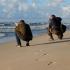Darius ir Gintas gaudo jūros purslus geram kadrui. | Fotografijos autorius : Vitalijus Bačianskas | © Macrogamta.lt | Šis tinklapis priklauso bendruomenei kuri domisi makro fotografija ir fotografuoja gyvąjį makro pasaulį.