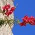 Didysis žioveinis - Antirrhinum majus | Fotografijos autorius : Gintautas Steiblys | © Macrogamta.lt | Šis tinklapis priklauso bendruomenei kuri domisi makro fotografija ir fotografuoja gyvąjį makro pasaulį.