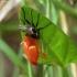 Išnara | Fotografijos autorius : Vidas Brazauskas | © Macrogamta.lt | Šis tinklapis priklauso bendruomenei kuri domisi makro fotografija ir fotografuoja gyvąjį makro pasaulį.