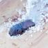 Išvartinis žeivėgraužis - Orthotomicus proximus | Fotografijos autorius : Romas Ferenca | © Macrogamta.lt | Šis tinklapis priklauso bendruomenei kuri domisi makro fotografija ir fotografuoja gyvąjį makro pasaulį.