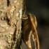 Liepinis sfinksas - Mimas tiliae   Fotografijos autorius : Dalia Račkauskaitė   © Macrogamta.lt   Šis tinklapis priklauso bendruomenei kuri domisi makro fotografija ir fotografuoja gyvąjį makro pasaulį.