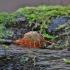 Paprastoji eglė - Picea abies | Fotografijos autorius : Kęstutis Obelevičius | © Macrogamta.lt | Šis tinklapis priklauso bendruomenei kuri domisi makro fotografija ir fotografuoja gyvąjį makro pasaulį.