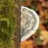 Postija - Postia alni | Fotografijos autorius : Vytautas Gluoksnis | © Macrogamta.lt | Šis tinklapis priklauso bendruomenei kuri domisi makro fotografija ir fotografuoja gyvąjį makro pasaulį.