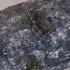 Raibasis pilkšys - Aegomorphus clavipes | Fotografijos autorius : Giedrius Markevičius | © Macrogamta.lt | Šis tinklapis priklauso bendruomenei kuri domisi makro fotografija ir fotografuoja gyvąjį makro pasaulį.