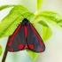 Raudonsparnė meškutė - Tyria jacobaeae | Fotografijos autorius : Vaida Paznekaitė | © Macrogamta.lt | Šis tinklapis priklauso bendruomenei kuri domisi makro fotografija ir fotografuoja gyvąjį makro pasaulį.