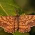 Rudasprindis - Pseudopanthera macularia | Fotografijos autorius : Dalia Račkauskaitė | © Macrogamta.lt | Šis tinklapis priklauso bendruomenei kuri domisi makro fotografija ir fotografuoja gyvąjį makro pasaulį.