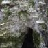 Tuopinė klevakempė - Oxyporus populinus | Fotografijos autorius : Vytautas Gluoksnis | © Macrogamta.lt | Šis tinklapis priklauso bendruomenei kuri domisi makro fotografija ir fotografuoja gyvąjį makro pasaulį.