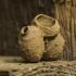Ąsotvapsvės - Eumenes sp. molinis lizdas | Fotografijos autorius : Irenėjas Urbonavičius | © Macrogamta.lt | Šis tinklapis priklauso bendruomenei kuri domisi makro fotografija ir fotografuoja gyvąjį makro pasaulį.