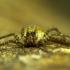 voras   Fotografijos autorius : Irenėjas Urbonavičius   © Macrogamta.lt   Šis tinklapis priklauso bendruomenei kuri domisi makro fotografija ir fotografuoja gyvąjį makro pasaulį.