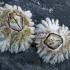 Jūrų gilės - Semibalanus balanoides | Fotografijos autorius : Gintautas Steiblys | © Macrogamta.lt | Šis tinklapis priklauso bendruomenei kuri domisi makro fotografija ir fotografuoja gyvąjį makro pasaulį.