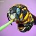 Vilnabitė - Anthidium punctatum ??? | Fotografijos autorius : Lukas Jonaitis | © Macrogamta.lt | Šis tinklapis priklauso bendruomenei kuri domisi makro fotografija ir fotografuoja gyvąjį makro pasaulį.