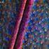 Baltalūpis šoklys - Cicindela hybrida (antsparnių fragmentas)   Fotografijos autorius : Lukas Jonaitis   © Macrogamta.lt   Šis tinklapis priklauso bendruomenei kuri domisi makro fotografija ir fotografuoja gyvąjį makro pasaulį.