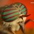 Sparva - Hybomitra sp. | Fotografijos autorius : Lukas Jonaitis | © Macrogamta.lt | Šis tinklapis priklauso bendruomenei kuri domisi makro fotografija ir fotografuoja gyvąjį makro pasaulį.