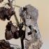 Juodaraštis ankstyvasis pelėdgalvis - Orthosia (Semiophora) gothica | Fotografijos autorius : Arūnas Eismantas | © Macrogamta.lt | Šis tinklapis priklauso bendruomenei kuri domisi makro fotografija ir fotografuoja gyvąjį makro pasaulį.
