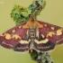 Mėtinė pyrausta - Pyrausta purpuralis    Fotografijos autorius : Arūnas Eismantas   © Macrogamta.lt   Šis tinklapis priklauso bendruomenei kuri domisi makro fotografija ir fotografuoja gyvąjį makro pasaulį.
