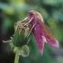 Pievinis sfinksas - Deilephila elpenor | Fotografijos autorius : Rasa Gražulevičiūtė | © Macrogamta.lt | Šis tinklapis priklauso bendruomenei kuri domisi makro fotografija ir fotografuoja gyvąjį makro pasaulį.