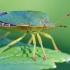 Palomena prasina - Medinė skydblakė | Fotografijos autorius : Gediminas Gražulevičius | © Macrogamta.lt | Šis tinklapis priklauso bendruomenei kuri domisi makro fotografija ir fotografuoja gyvąjį makro pasaulį.
