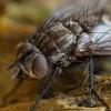 Dygliamusė - Lypha dubia   Fotografijos autorius : Žilvinas Pūtys   © Macrogamta.lt   Šis tinklapis priklauso bendruomenei kuri domisi makro fotografija ir fotografuoja gyvąjį makro pasaulį.