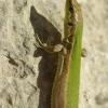 Maltos ropliai (II)   Fotografijos autorius : Deividas Makavičius   © Macrogamta.lt   Šis tinklapis priklauso bendruomenei kuri domisi makro fotografija ir fotografuoja gyvąjį makro pasaulį.
