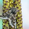 Pietinis šeriasprindis - Apocheima hispidaria | Fotografijos autorius : Vaida Paznekaitė | © Macrogamta.lt | Šis tinklapis priklauso bendruomenei kuri domisi makro fotografija ir fotografuoja gyvąjį makro pasaulį.