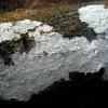 Spuogė - Phlyctis sp. | Fotografijos autorius : Aleksandras Stabrauskas | © Macrogamta.lt | Šis tinklapis priklauso bendruomenei kuri domisi makro fotografija ir fotografuoja gyvąjį makro pasaulį.