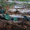 Žaliagrybis - Chlorociboria sp. | Fotografijos autorius : Vytautas Gluoksnis | © Macrogamta.lt | Šis tinklapis priklauso bendruomenei kuri domisi makro fotografija ir fotografuoja gyvąjį makro pasaulį.