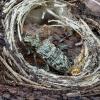 Briaunotasis ragijus - Rhagium inquisitor | Fotografijos autorius : Kazimieras Martinaitis | © Macrogamta.lt | Šis tinklapis priklauso bendruomenei kuri domisi makro fotografija ir fotografuoja gyvąjį makro pasaulį.