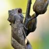Bulvinis pelėdgalvis - Hydraecia micacea   Fotografijos autorius : Arūnas Eismantas   © Macrogamta.lt   Šis tinklapis priklauso bendruomenei kuri domisi makro fotografija ir fotografuoja gyvąjį makro pasaulį.
