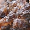 Drebutis - Exidia cartilaginea | Fotografijos autorius : Gintautas Steiblys | © Macrogamta.lt | Šis tinklapis priklauso bendruomenei kuri domisi makro fotografija ir fotografuoja gyvąjį makro pasaulį.
