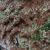 Kietasis laibadyglis - Steccherinum robustus   Fotografijos autorius : Vytautas Gluoksnis   © Macrogamta.lt   Šis tinklapis priklauso bendruomenei kuri domisi makro fotografija ir fotografuoja gyvąjį makro pasaulį.
