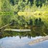 Negyvasis (Gervių) ežeras | Fotografijos autorius : Gintautas Steiblys | © Macrogamta.lt | Šis tinklapis priklauso bendruomenei kuri domisi makro fotografija ir fotografuoja gyvąjį makro pasaulį.
