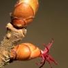 Paprastasis lazdynas - Corylus avellana   Fotografijos autorius : Ramunė Vakarė   © Macrogamta.lt   Šis tinklapis priklauso bendruomenei kuri domisi makro fotografija ir fotografuoja gyvąjį makro pasaulį.