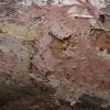Spurguotasis laibadyglis - Steccherinum fimbriatum   Fotografijos autorius : Vytautas Gluoksnis   © Macrogamta.lt   Šis tinklapis priklauso bendruomenei kuri domisi makro fotografija ir fotografuoja gyvąjį makro pasaulį.