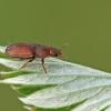 Žvilgvabalis - Epuraea sp.   Fotografijos autorius : Gintautas Steiblys   © Macrogamta.lt   Šis tinklapis priklauso bendruomenei kuri domisi makro fotografija ir fotografuoja gyvąjį makro pasaulį.