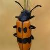 Skaudvabalis - Mylabris variabilis   Fotografijos autorius : Gintautas Steiblys   © Macrogamta.lt   Šis tinklapis priklauso bendruomenei kuri domisi makro fotografija ir fotografuoja gyvąjį makro pasaulį.