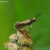 Purieninė kandis - Micropterix calthella   Fotografijos autorius : Romas Ferenca   © Macrogamta.lt   Šis tinklapis priklauso bendruomenei kuri domisi makro fotografija ir fotografuoja gyvąjį makro pasaulį.